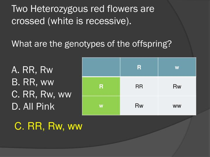 Two Heterozygous red flowers are crossed (white is recessive).