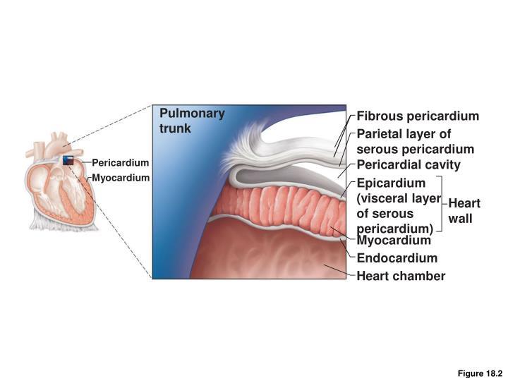 Pulmonary
