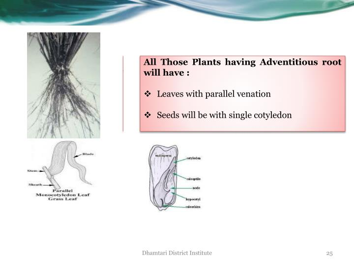 All Those Plants having Adventitious root will have :