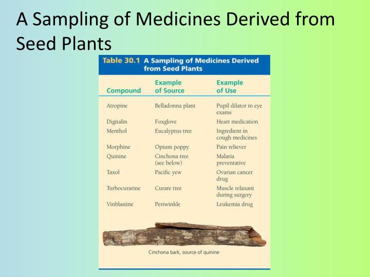 A Sampling of Medicines Derived from Seed Plants