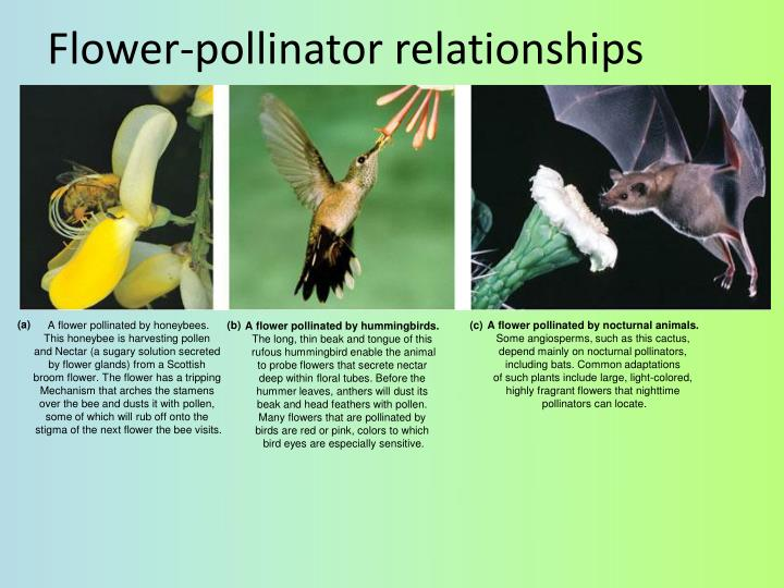 Flower-pollinator relationships