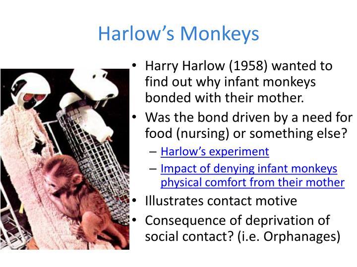 Harlow's Monkeys