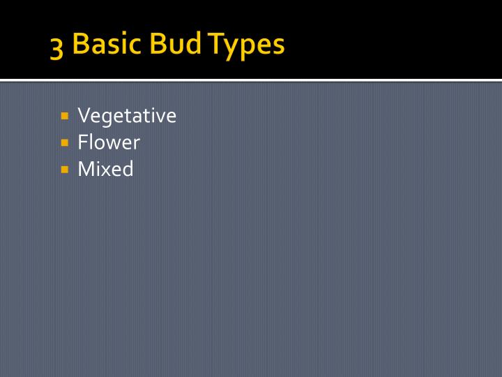 3 Basic Bud Types