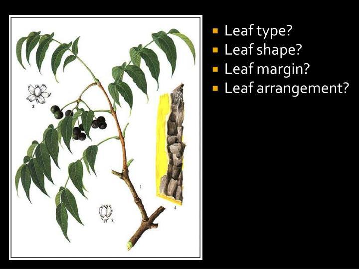 Leaf type?