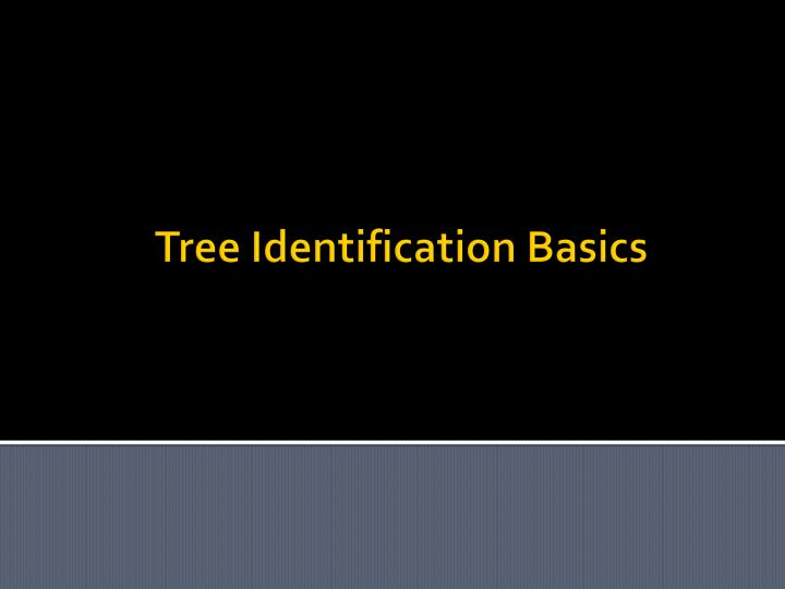 Tree identification basics