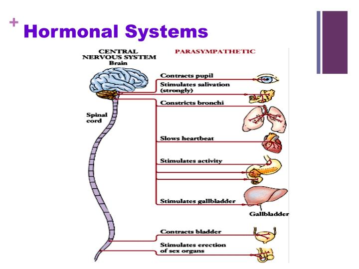 Hormonal Systems