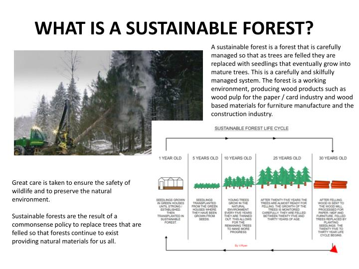 WHAT IS A SUSTAINABLE FOREST?