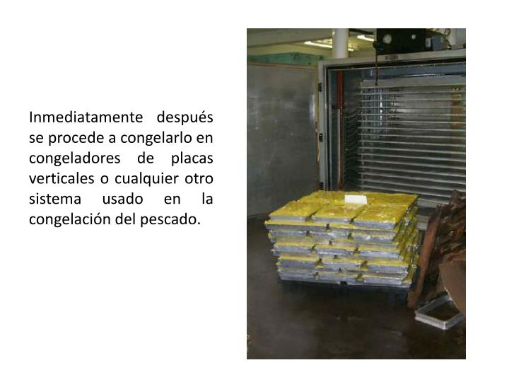 Inmediatamente después se procede a congelarlo en congeladores de placas verticales o cualquier otro sistema usado en la congelación del pescado.