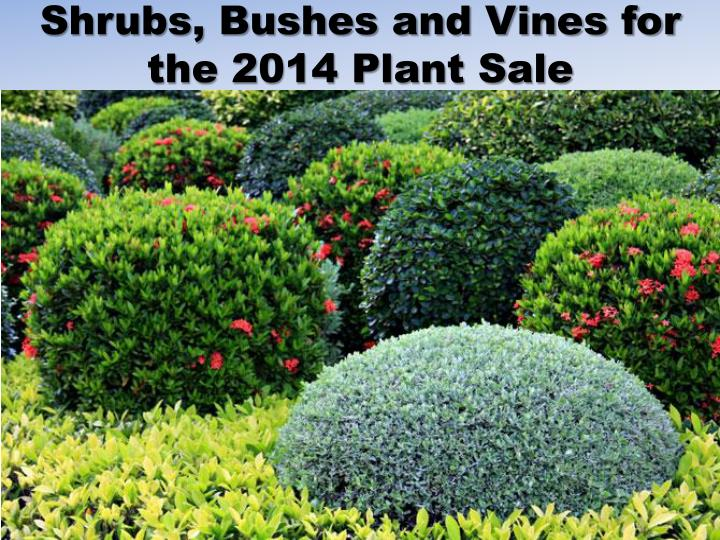 Shrubs bushes and vines for the 2014 plant sale