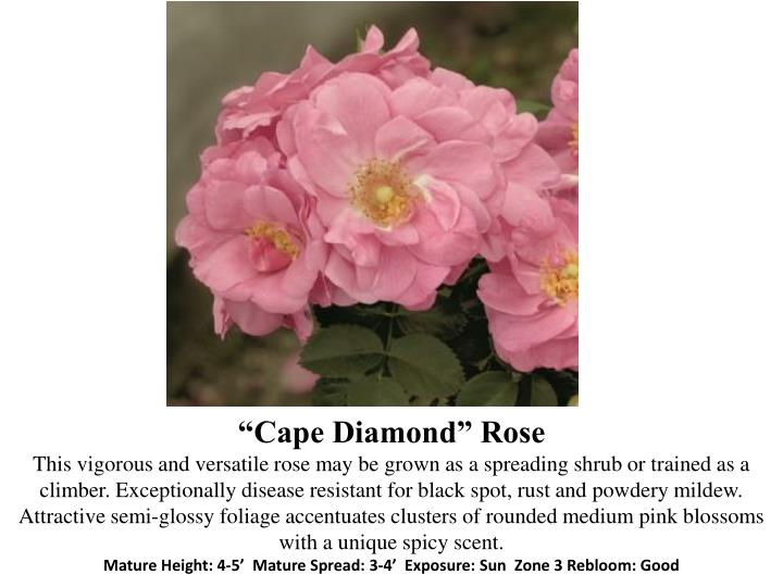 """Cape Diamond"""