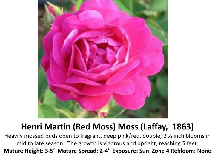 Henri Martin (Red