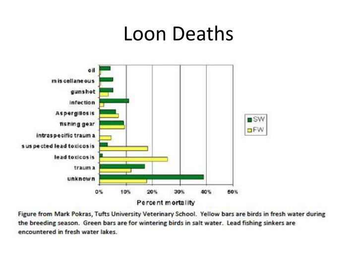 Loon Deaths