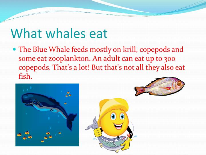 What whales eat
