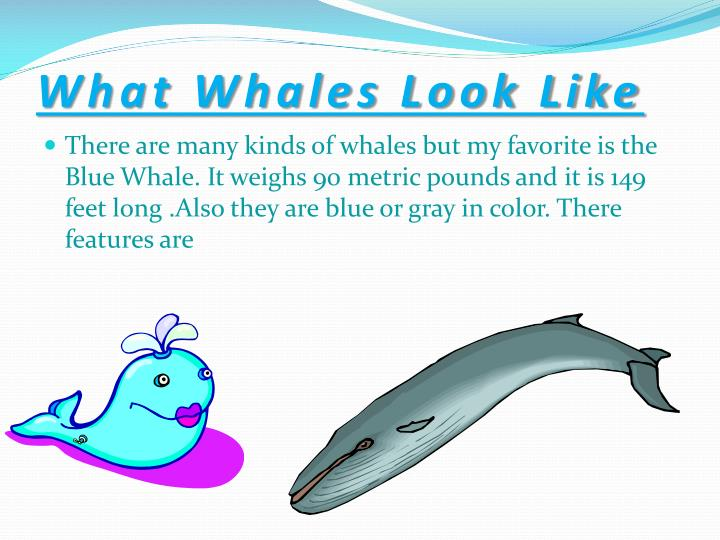 What Whales Look Like