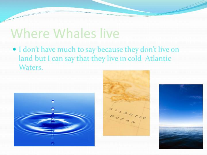 Where Whales live