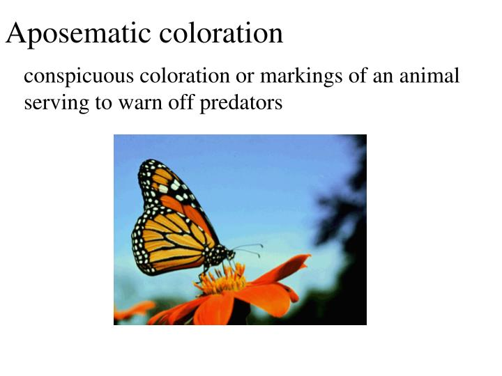 Aposematic coloration