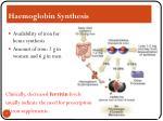 haemoglobin synthesis