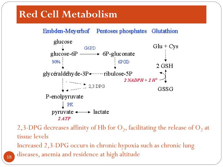 Red Cell Metabolism