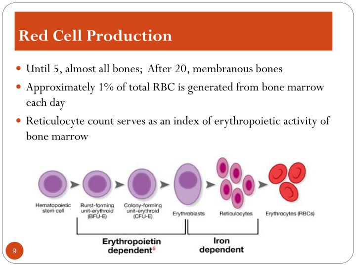 Red Cell Production