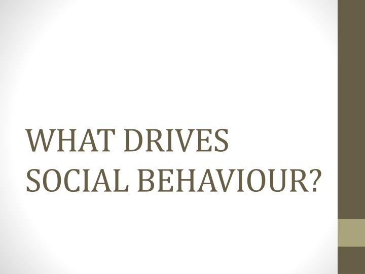 What drives social behaviour