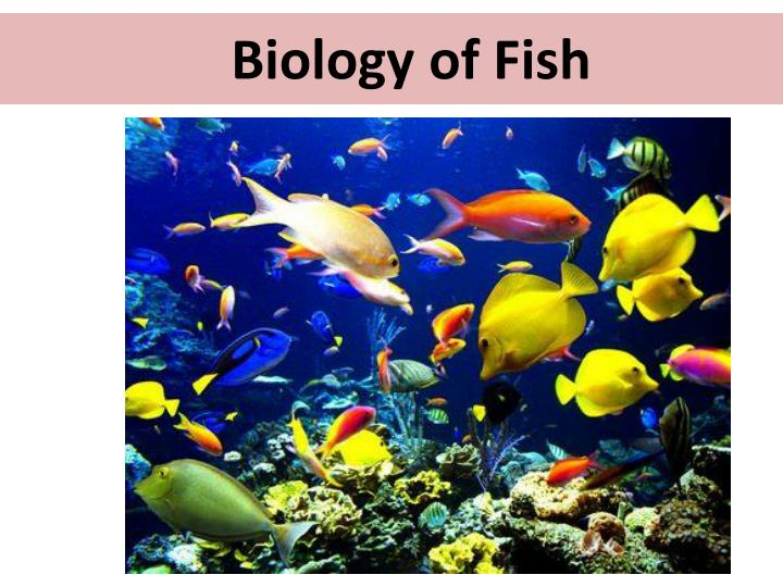 Biology of fish