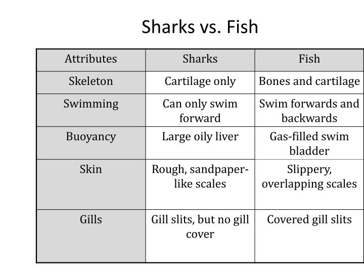 Sharks vs. Fish