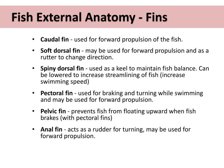 Fish External Anatomy - Fins
