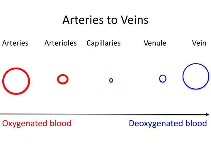 Arteries to Veins