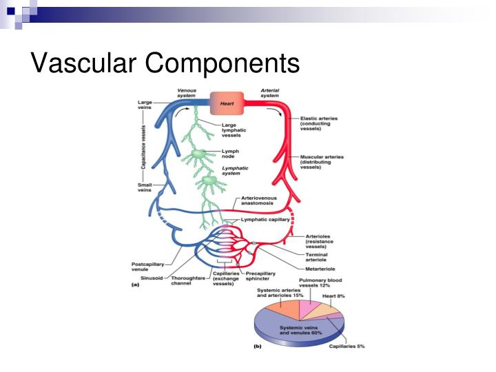 Vascular Components