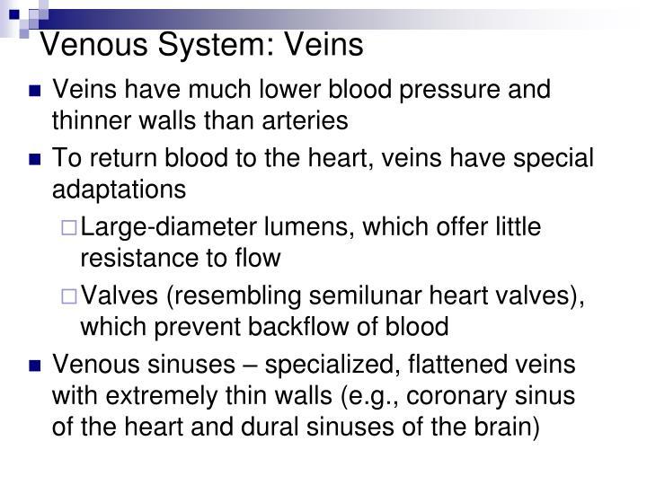 Venous System: Veins