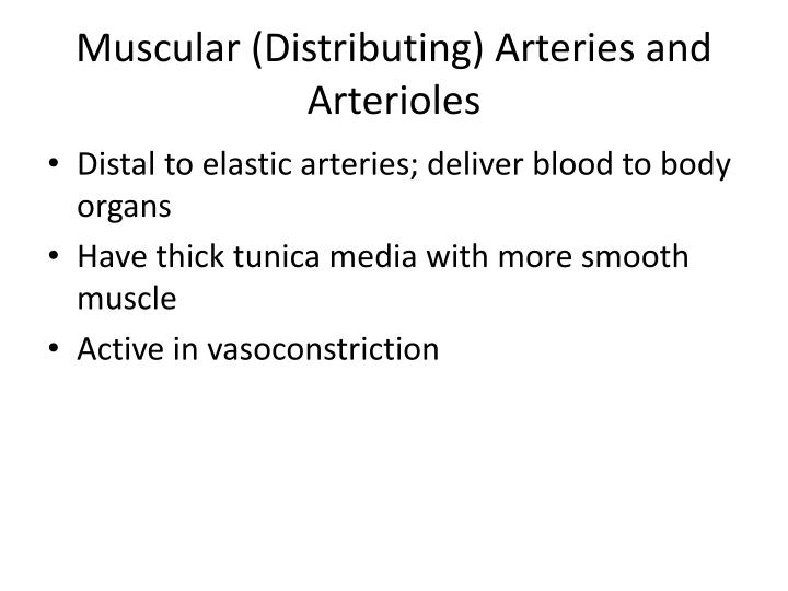 Muscular (Distributing) Arteries and Arterioles