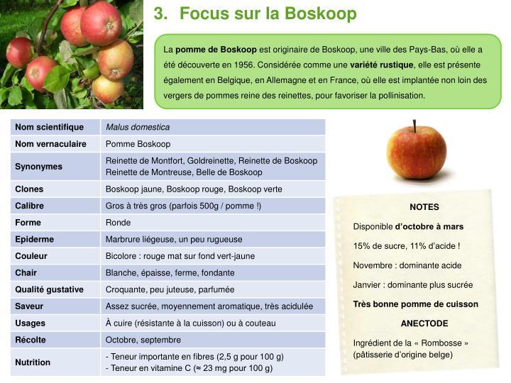 Focus sur la Boskoop