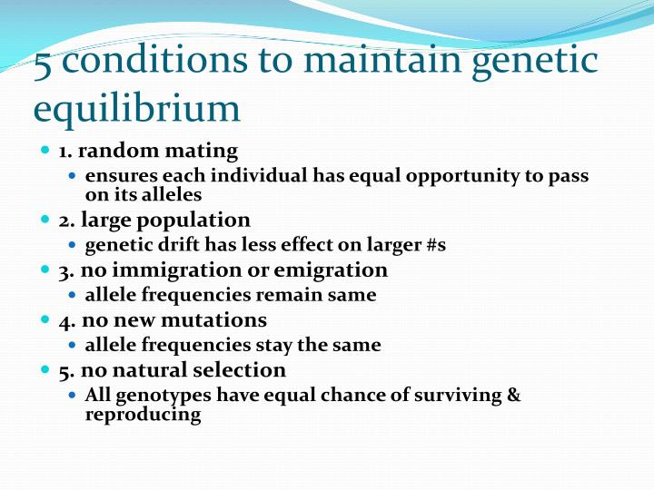 5 conditions to maintain genetic equilibrium