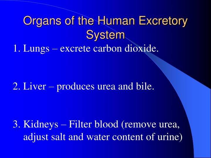 Ppt - The Excretory System Powerpoint Presentation
