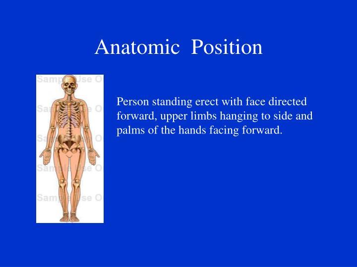 Anatomic  Position