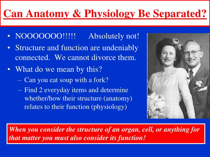 Can Anatomy & Physiology Be Separated?