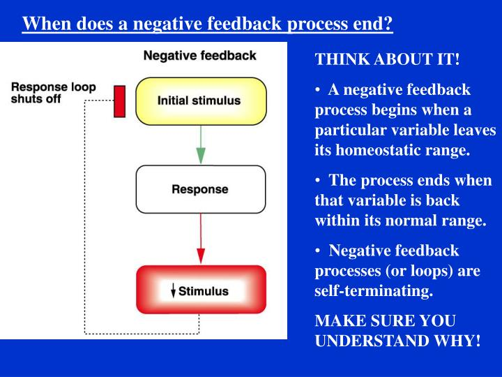 When does a negative feedback process end?