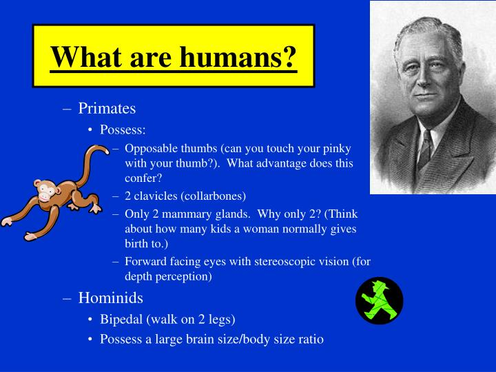 What are humans?