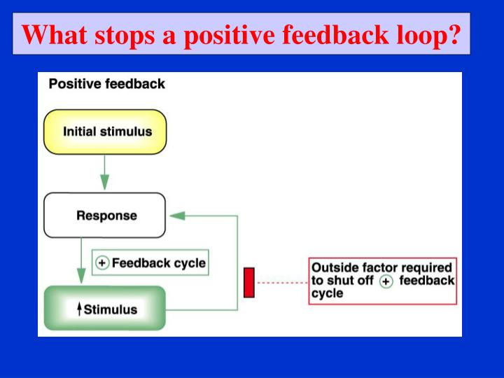 What stops a positive feedback loop?