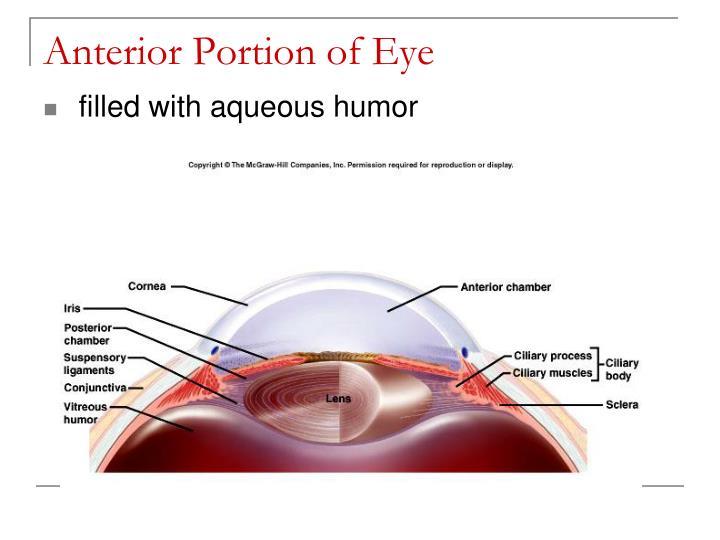 Anterior Portion of Eye
