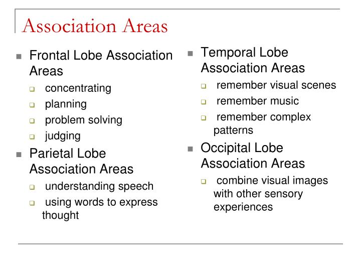 Frontal Lobe Association Areas