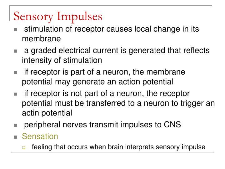 Sensory Impulses
