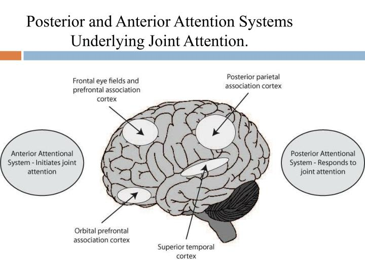 Posterior and Anterior Attention Systems