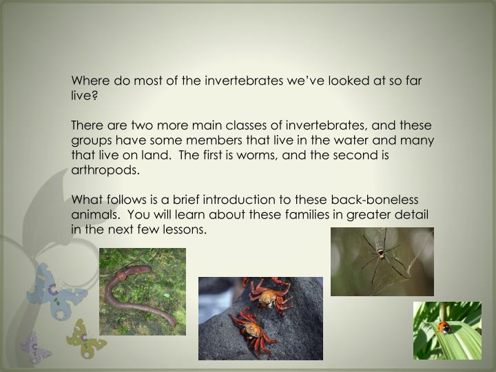 Where do most of the invertebrates we've looked at so far live?