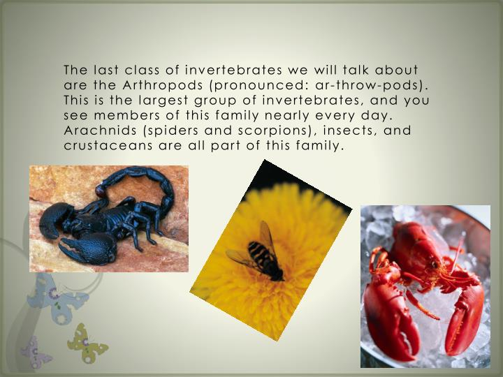 The last class of invertebrates we will talk about are the Arthropods (pronounced:
