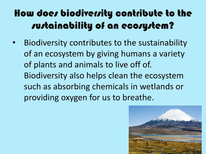 How does biodiversity contribute to the sustainability of an ecosystem?