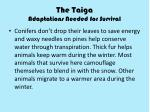 the taiga adaptations needed for survival