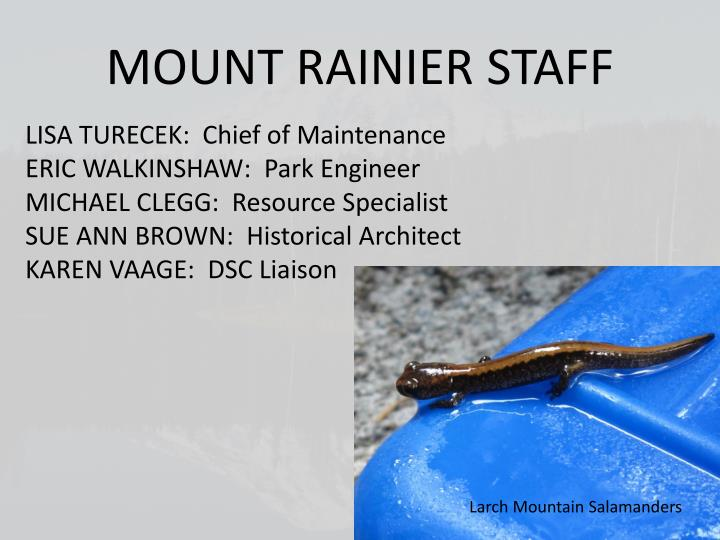 MOUNT RAINIER STAFF