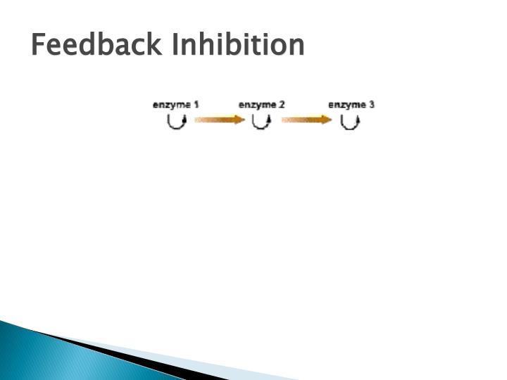 Feedback Inhibition