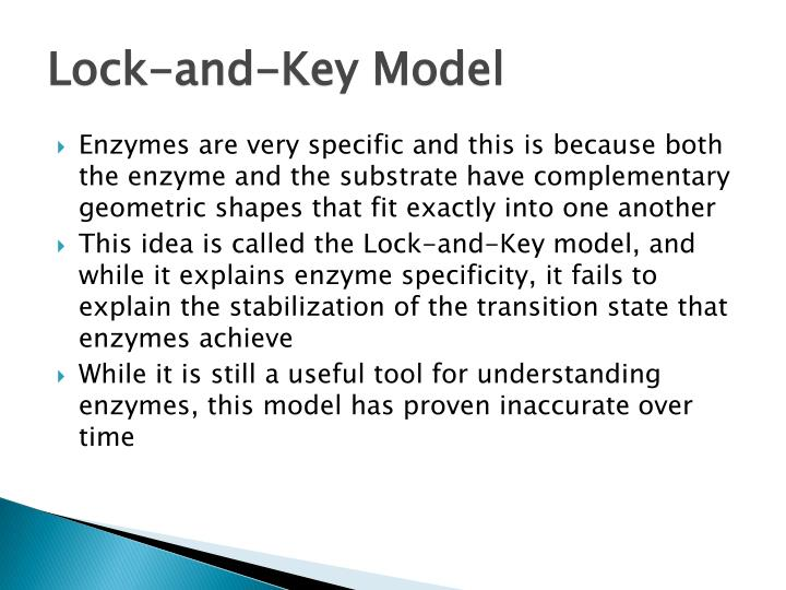 Lock-and-Key Model